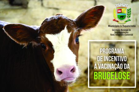 Abertas as inscrições para o Programa de Incentivo à Vacinação Contra a Brucelose